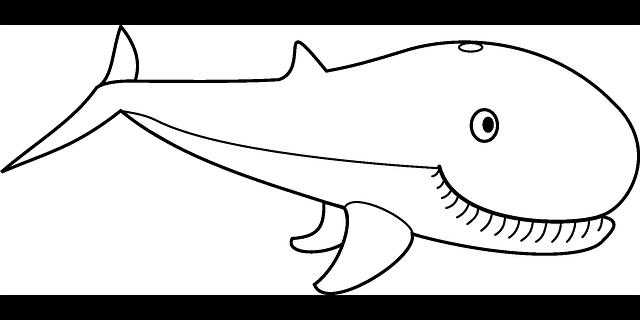 Worksheet. Dibujos de ballenas  BALLENAPEDIA